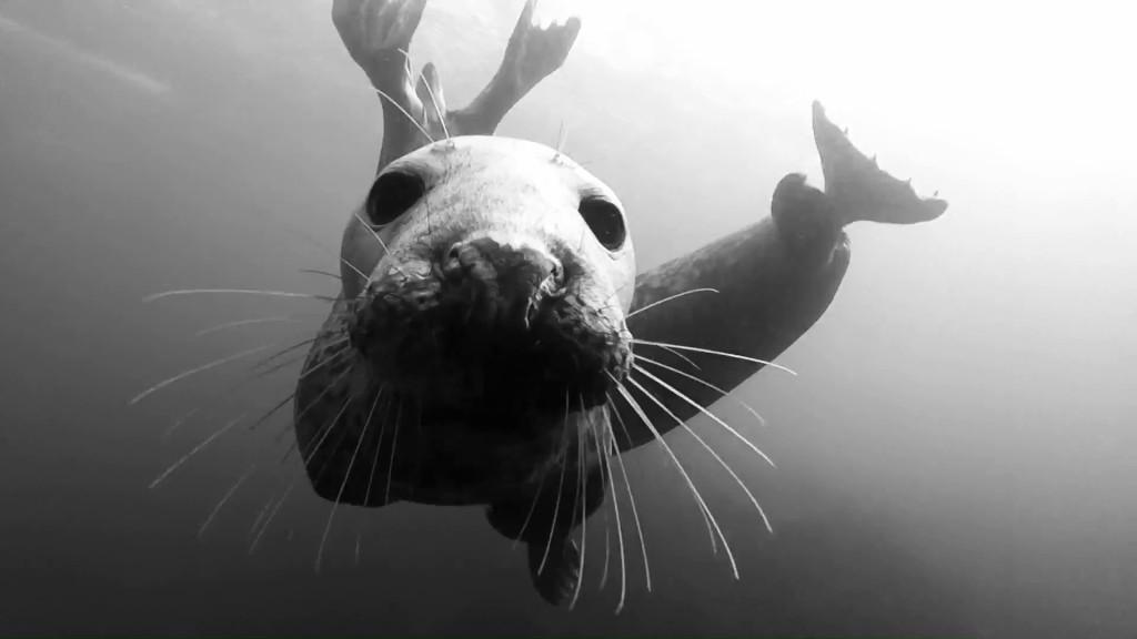 farnes-seal